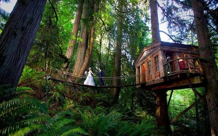 Отель на дереве - уникальное место для отдыха (Сиэтл, США)